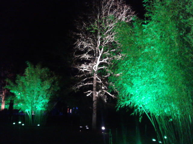 Kew Gardens by night (10)