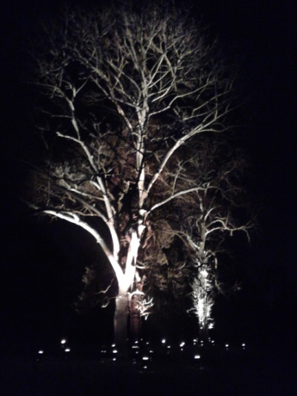 Kew Gardens by night (19)