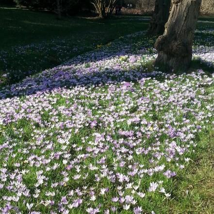 Saville Gardens (9)
