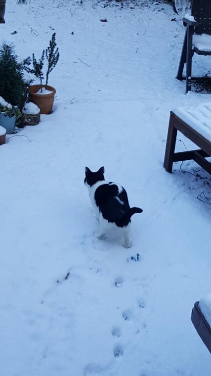 Snow (9)