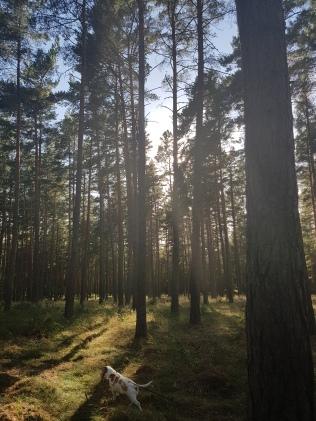 Sweden Summer (90)